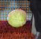Cabbage Thrown at steve bruce villa park aston villa