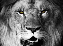 Aston Villa Lion Fight Like Lions