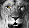 Aston Villa Lion Fight Like Lions